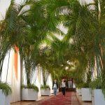 пальмовая алея