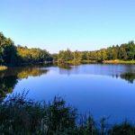 лісове озеро
